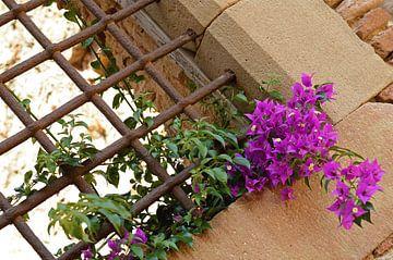 Lila Blumen von Daniek Vermeer