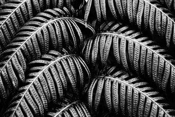 Tropische Farn Schwarz Weiß von Jan Brons