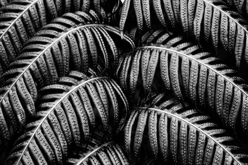 Tropische Farn Schwarz Weiß sur Jan Brons