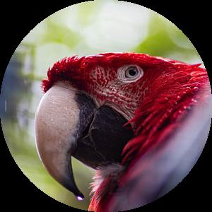 Papegaai in de regen van Joyce Schouten