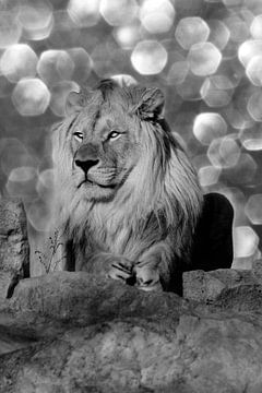 Löwe von Riccardo Franke