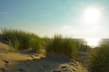 Zandduinen op de Noordzee in Nederland van Claudia Evans