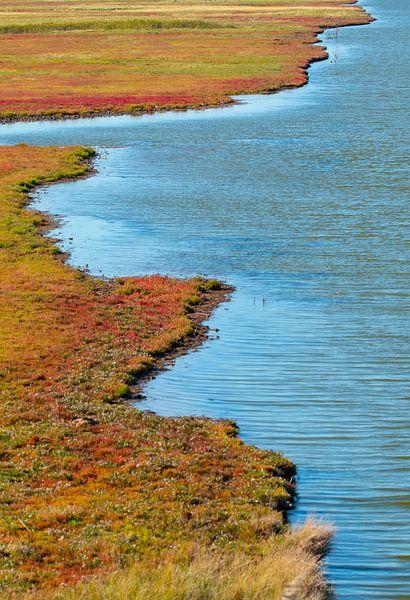 zeekraal bij Zierikzee van Ria Bloemendaal