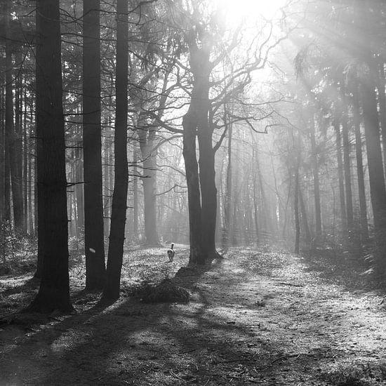 Zonnestralen schijnen door het bos in zwart wit 1