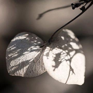 Herfst van Carla Vermeend