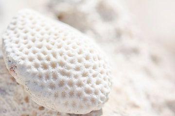 Koralle auf Aruba von What I C