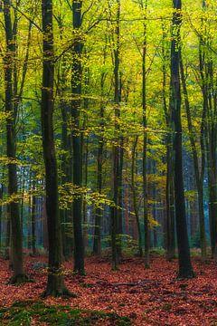 """Waldlandschaft """"Herbstwald"""" von"""