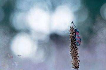 Schmetterling von Francis Dost