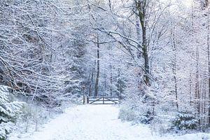 De Ugchelse Berg-Het Leest in de sneeuw#3 van