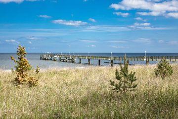 Seebrücke in Koserow auf der Insel Usedom von Rico Ködder
