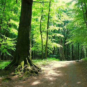 Wald im Gegenilcht van