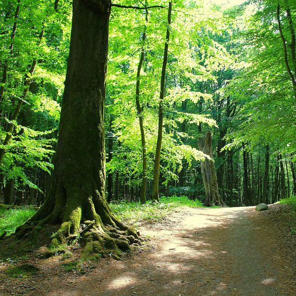Wald im Gegenilcht van Ostsee Bilder