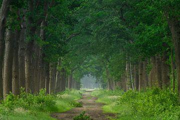 bospad in het groen van Michel Knikker