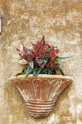 Plantenbak in Italiaanse straat
