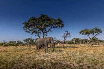 Elefant im Okavango-Delta von Erik Verbeeck