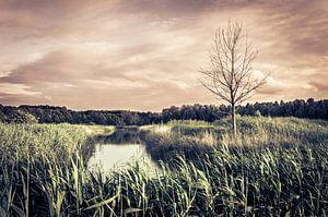 Dode boom in Almeerse Pampus polder