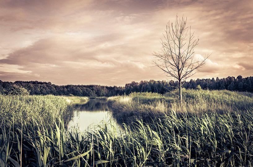 Dode boom in Almeerse Pampus polder van Sven Wildschut