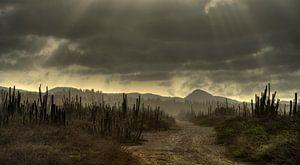 Cactus Field Bonaire van
