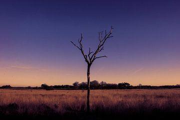 Foto boom natuur paars blauw oranje van Angela Kiemeneij