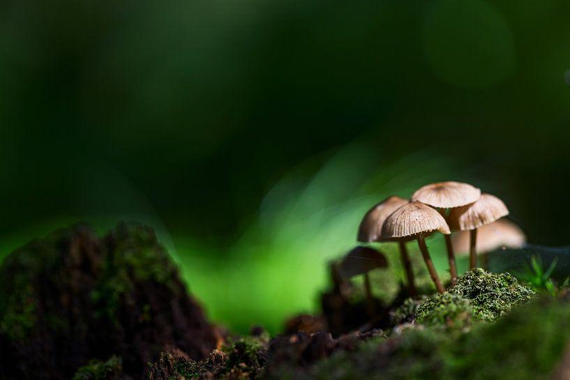 Kleine Gruppe Pilze im Wald sur Mark Scheper