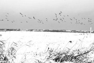 vlucht boeven het ijs van