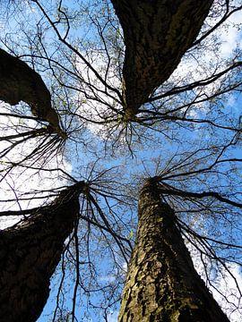 Vier bomen sur Karin Stuurman