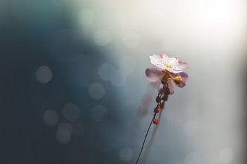 fleur sur Kristof Ven