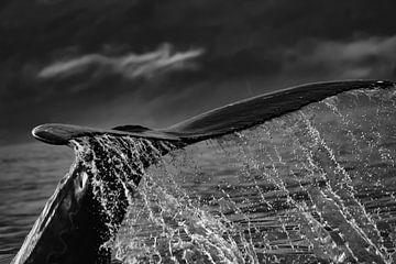 Staart van een bultrug (walvis) met waterdruppels van Anne Ponsen