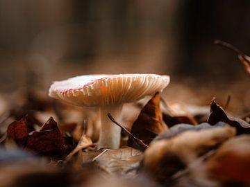 Just a mushroom van Lex Schulte
