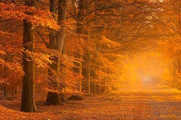 Herfst in volle kleuren in het bos met een mistige sfeer van Bas Meelker
