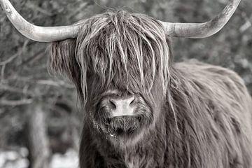 Ein Schwarz-Weiß-Porträt eines Highlanders von Dennisart Fotografie