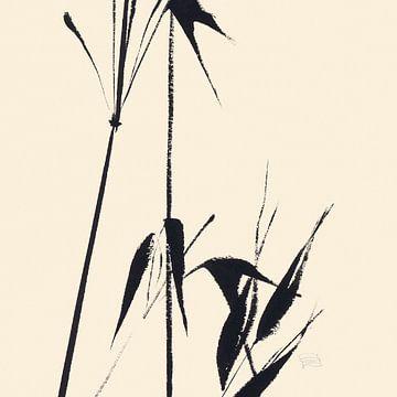 Bamboo II, Chris Paschke van Wild Apple