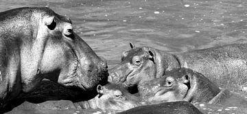 Nijlpaard familie van Annemarie Winkelhagen