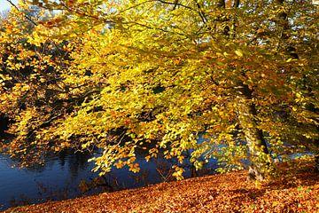 Baum, Herbst, Bremer Wallanlagen, Bremen, Deutschland