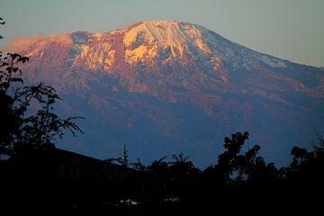 Kilimanjaro van Marvelli