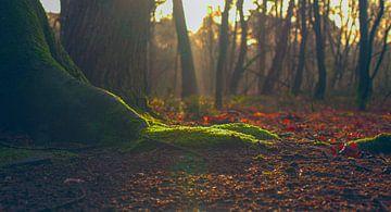 Der Wald erwacht von Stephan Krabbendam