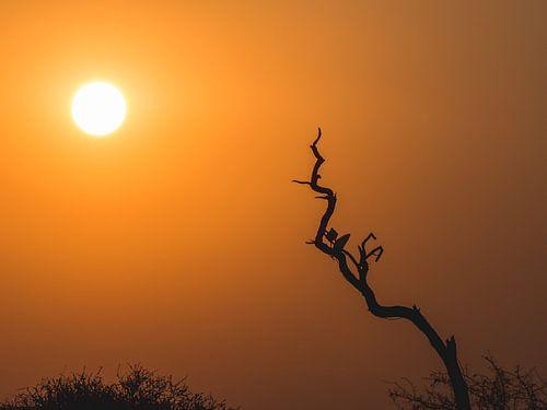 African Sunset van