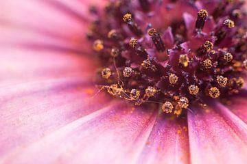 Hart van de bloem van Inge Heeringa