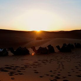 Zonsopkomst in de woestijn van Gonnie van de Schans