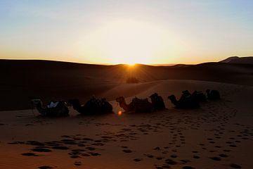 Zonsopkomst in de woestijn van