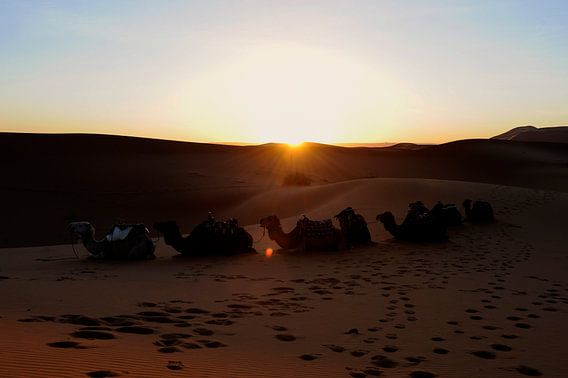 Zonsopkomst in de woestijn