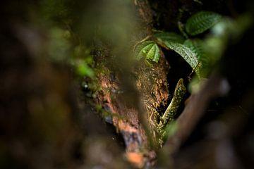 Camouflage van Jip Leermakers