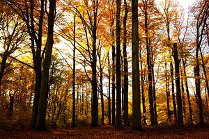 Beech forest von