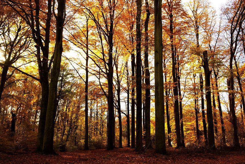 Beech forest von Werner V.M.