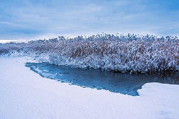 Riet aan de oever van de Warnow in de Hanzestad Rostock in de winter van Rico Ködder