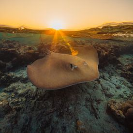 Malediven 8 von Andy Troy