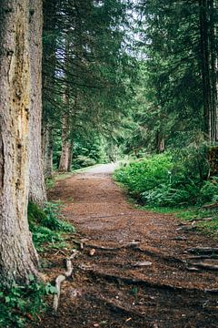 Waldweg von Patrycja Polechonska