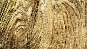 Verweerd hout van oude boomstam van