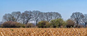 Nach dem Winter geerntetes Maisfeld , Mook - Middelaar von Jeroen Hoogakker