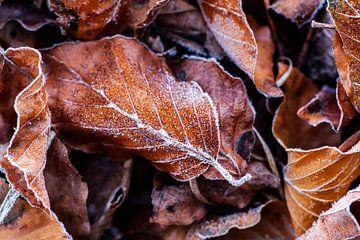 Feuilles d'automne Veluwe sur Tim Annink